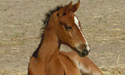 Picture of foal